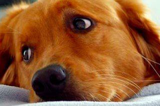 Servizi, Ricoveri cani e gatti, ricovero pazienti infettivi