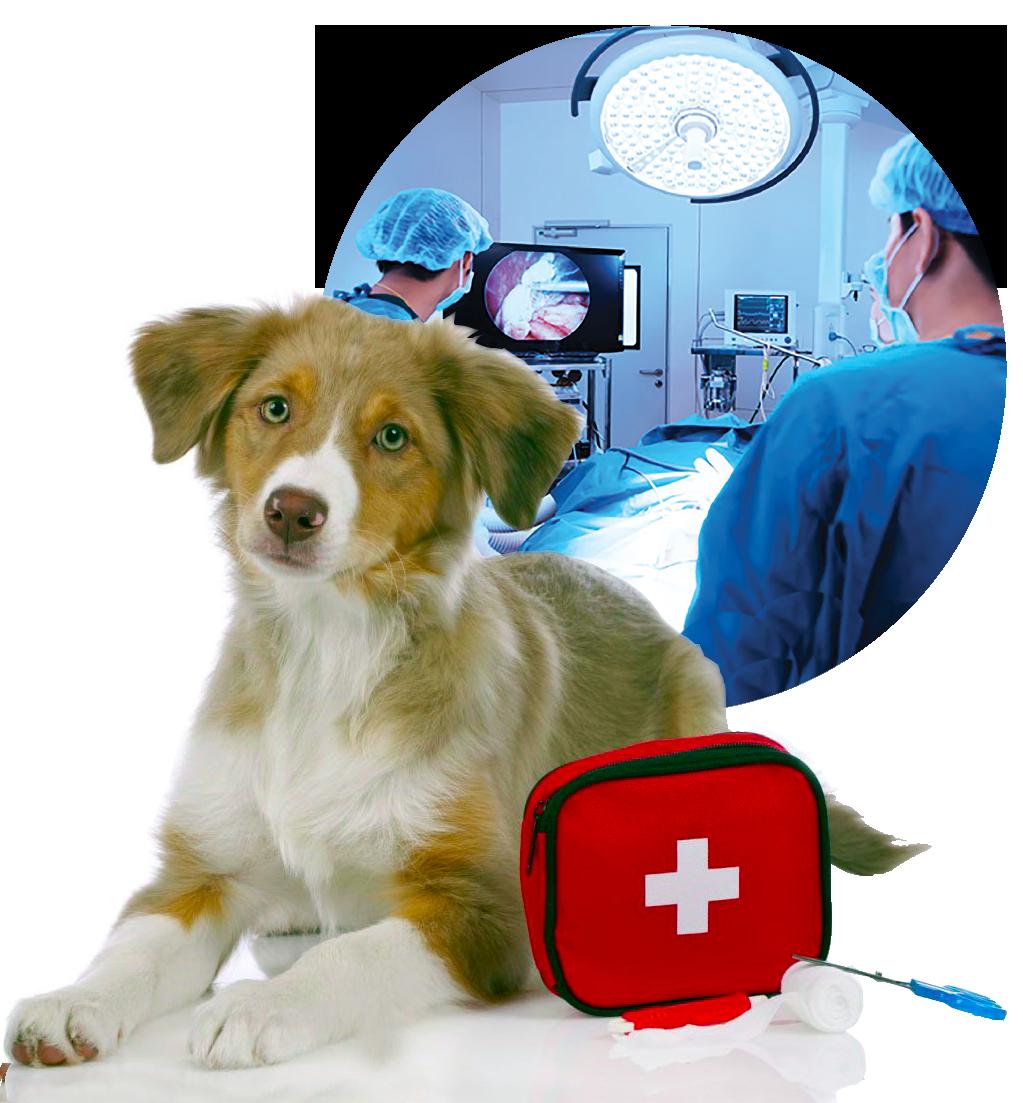Clinica veterinaria San Francesco