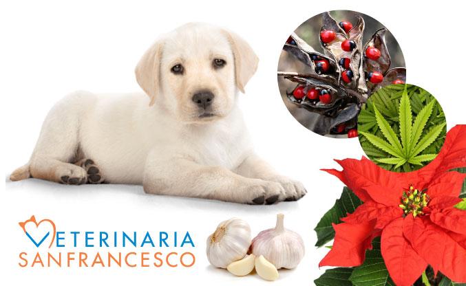 Piante, fiori ed erbe tossiche per i nostri animali