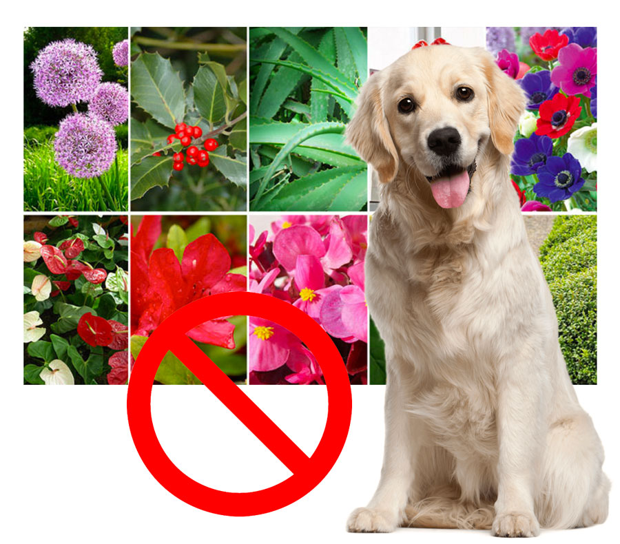 Piante Da Appartamento Non Tossiche Per Gatti.Piante Fiori Ed Erbe Tossiche Per I Nostri Animali Clinica