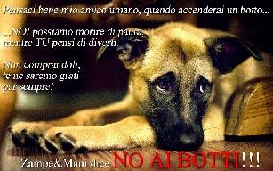 Consigli per capodanno, Clinica veterinaria San Francesco