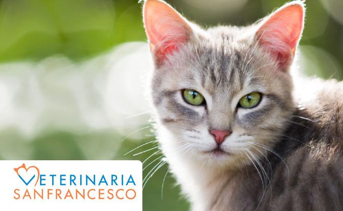 L'ipertiroidismo nel gatto: prevenirlo e curarlo