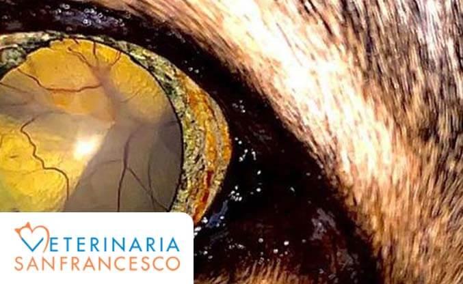 distacco_retina_gatto_esterno.jpg